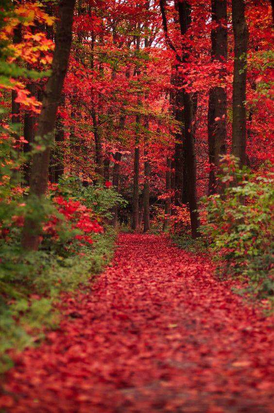 A Kentucky trail in the fall - crumbbelly - bit.ly:2j1JRx8