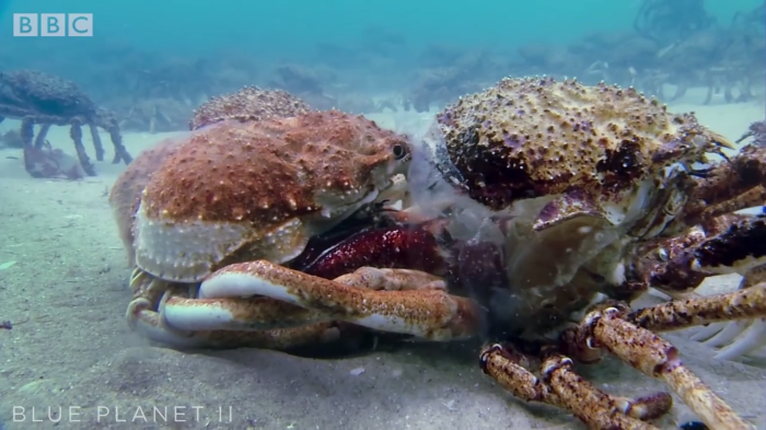 Video: Army of Crabs gather together just to break out