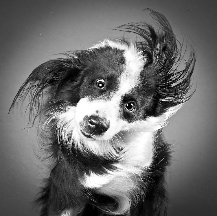 This dog shaking its fur - rocklou - http://bit.ly/2ppHy9X