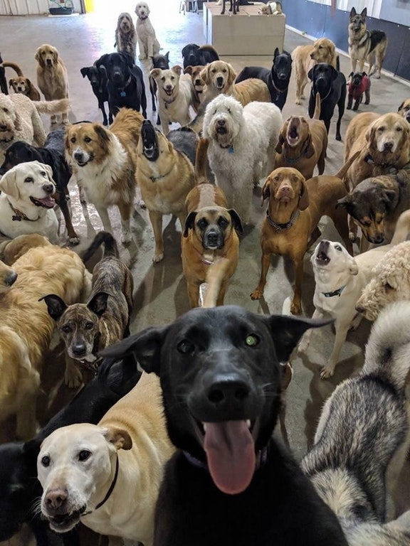 My brother's dog taking a selfie with some of her friends - sahfriendly - bit.ly2J8M4Q9