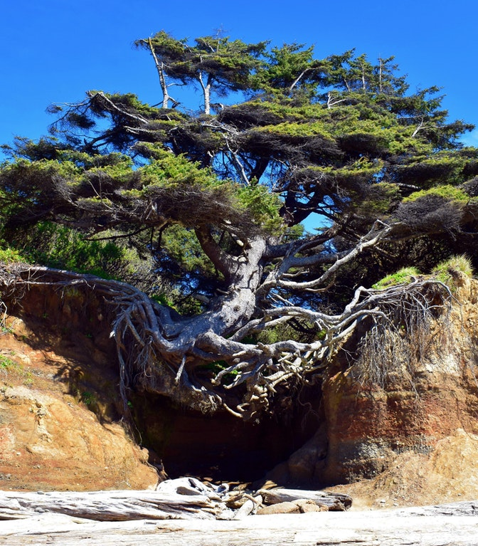 Tree holding on root cave - AlwaysLocal - bit.ly2HZwjK9