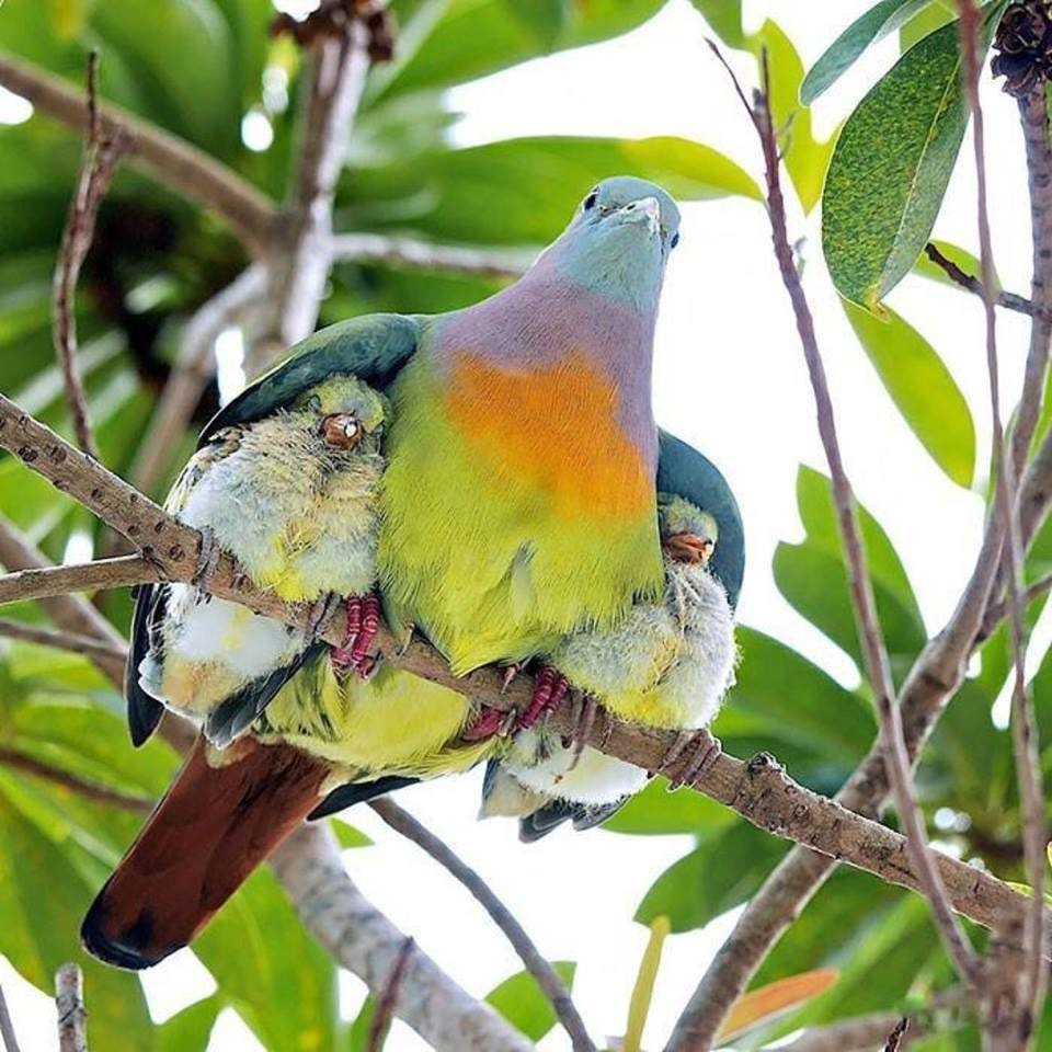 Momma bird and her babies - mac_is_crack - bit.ly2Air1tO