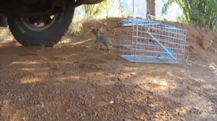 Video: This Squirrel knows it's being watched