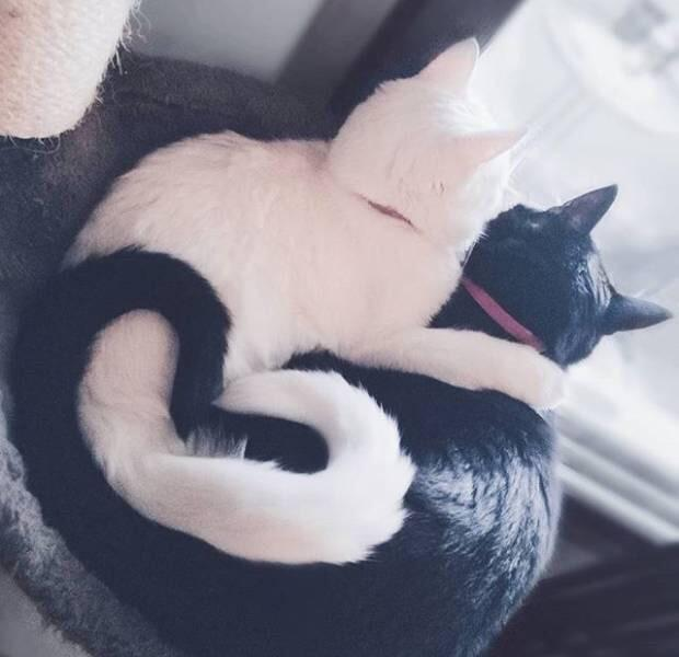 I love you - hootersbutwithcats - bit.ly2w53h7m