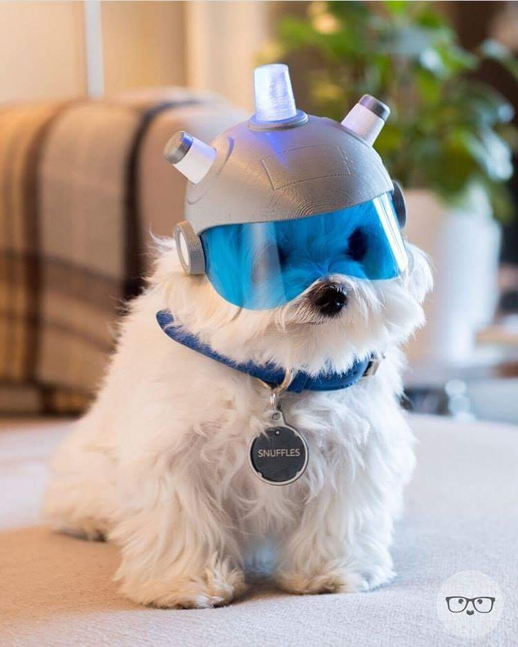 This dog wearing a helmet and tag that reads Snuffles - fjordfjord - bit.ly2MgEE2s