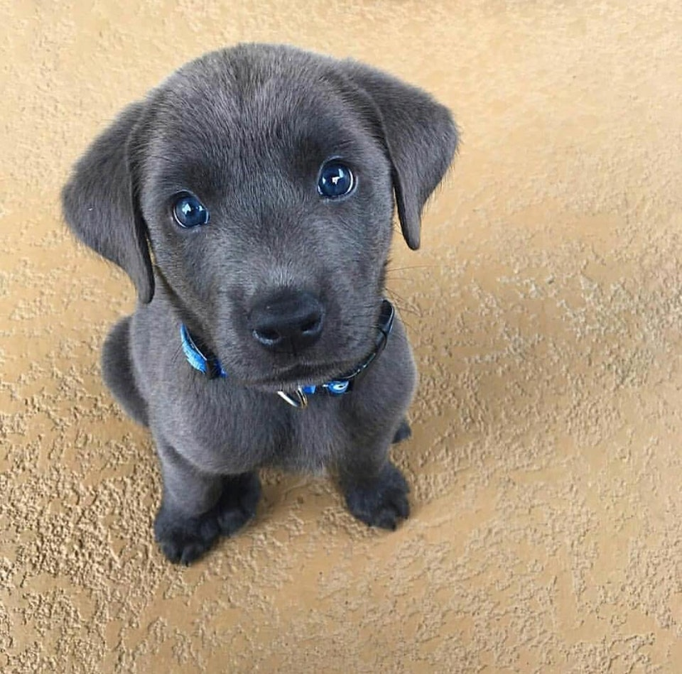 the most photogenic puppy you ever did see - christopher123454321 - bit.ly2MdEkkY
