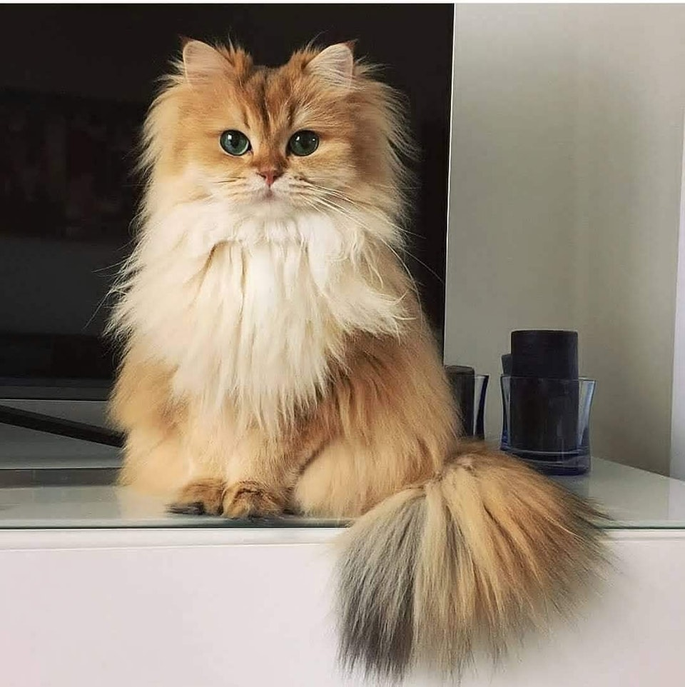 Smoothie the Cat lives up to her name - knivef - bit.ly2Pwo7V0