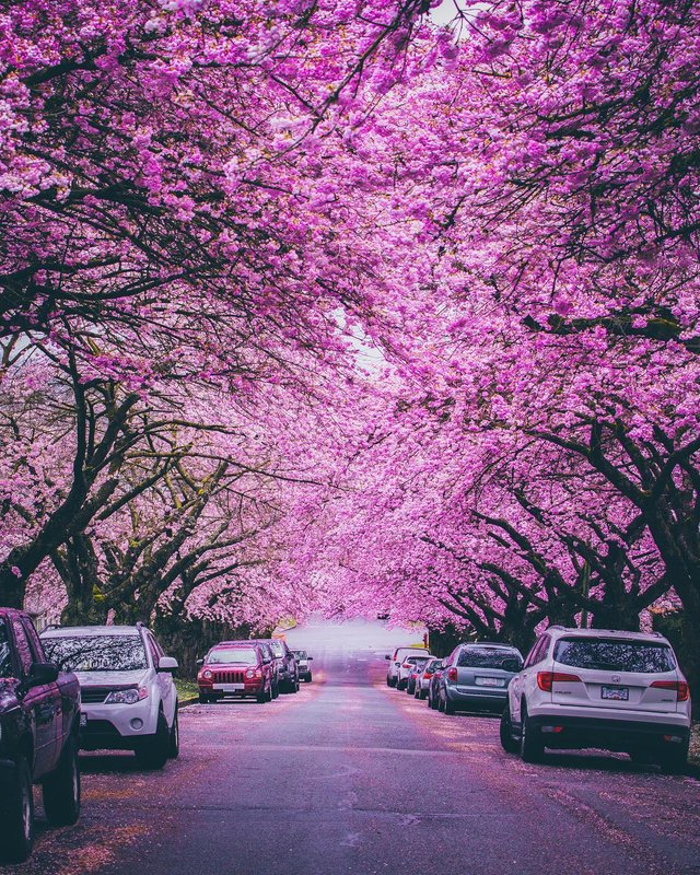 Spring in Vancouver, British Columbia