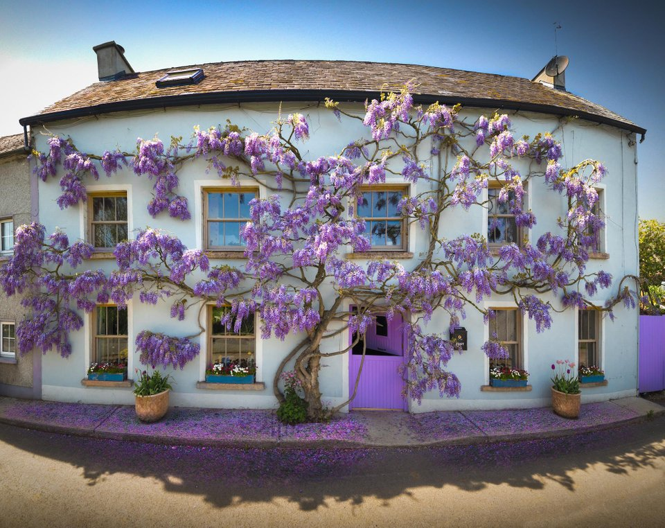 House in Ireland hugged by Mother Nature