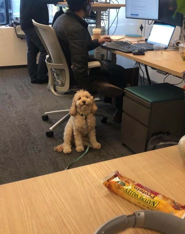 Watched my coworkers dog for an afternoon and now he won't stop staring at me