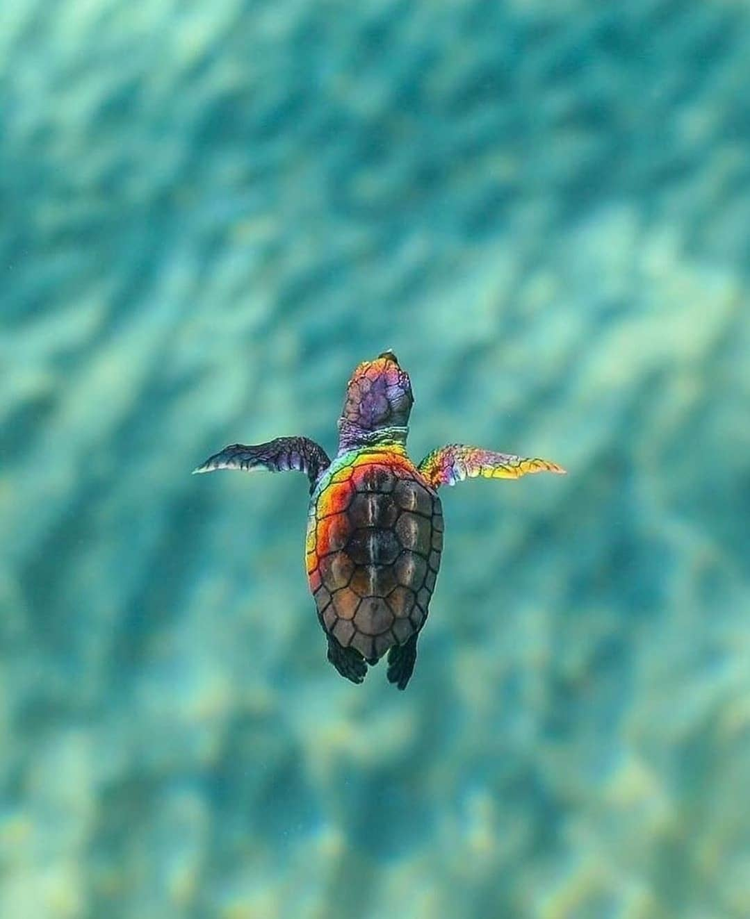 Beautiful Baby Turtle