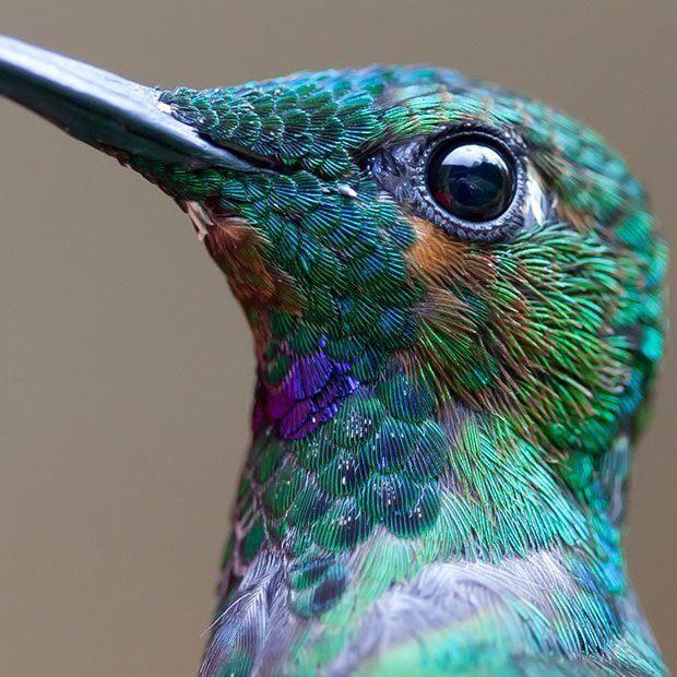 Macro Shot of hummingbird