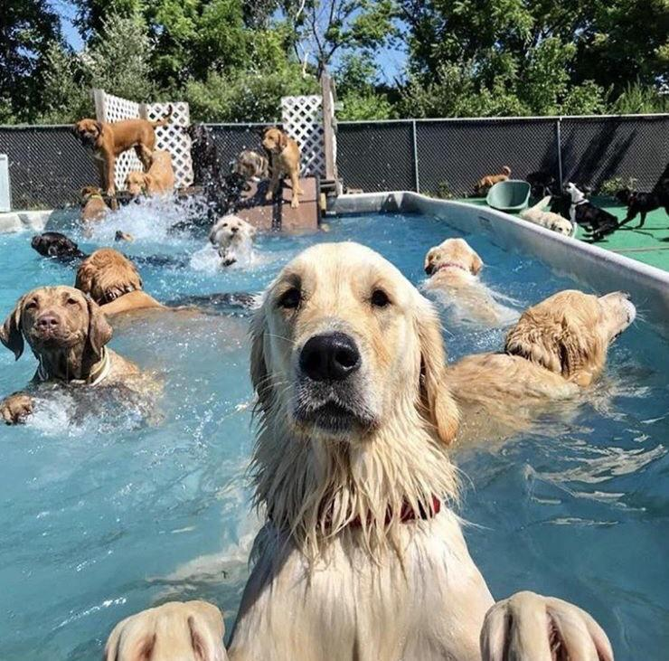 These dogs in a swimming pool