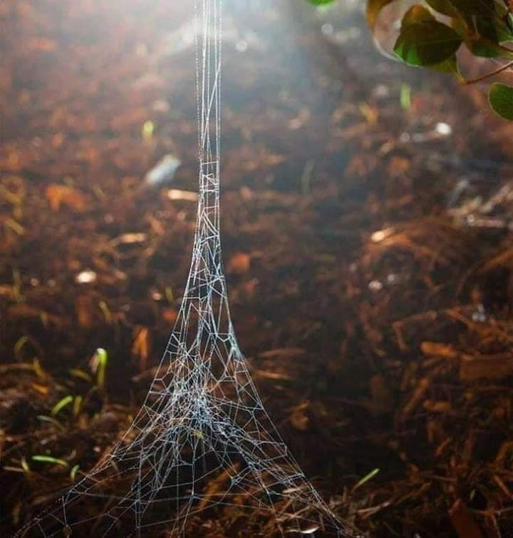 A spider constructing the Eiffel tower