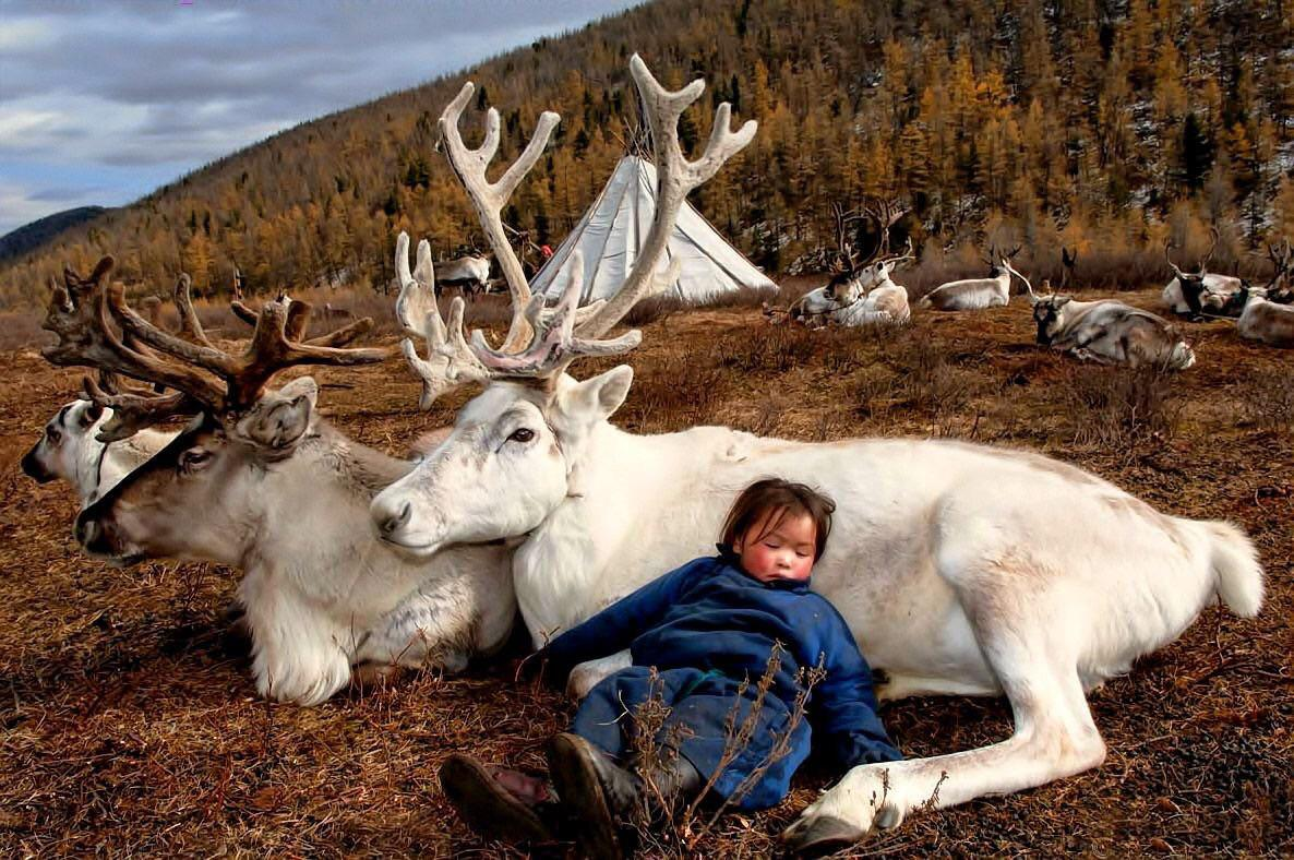 Child sleeping with Reindeer in Mongolia