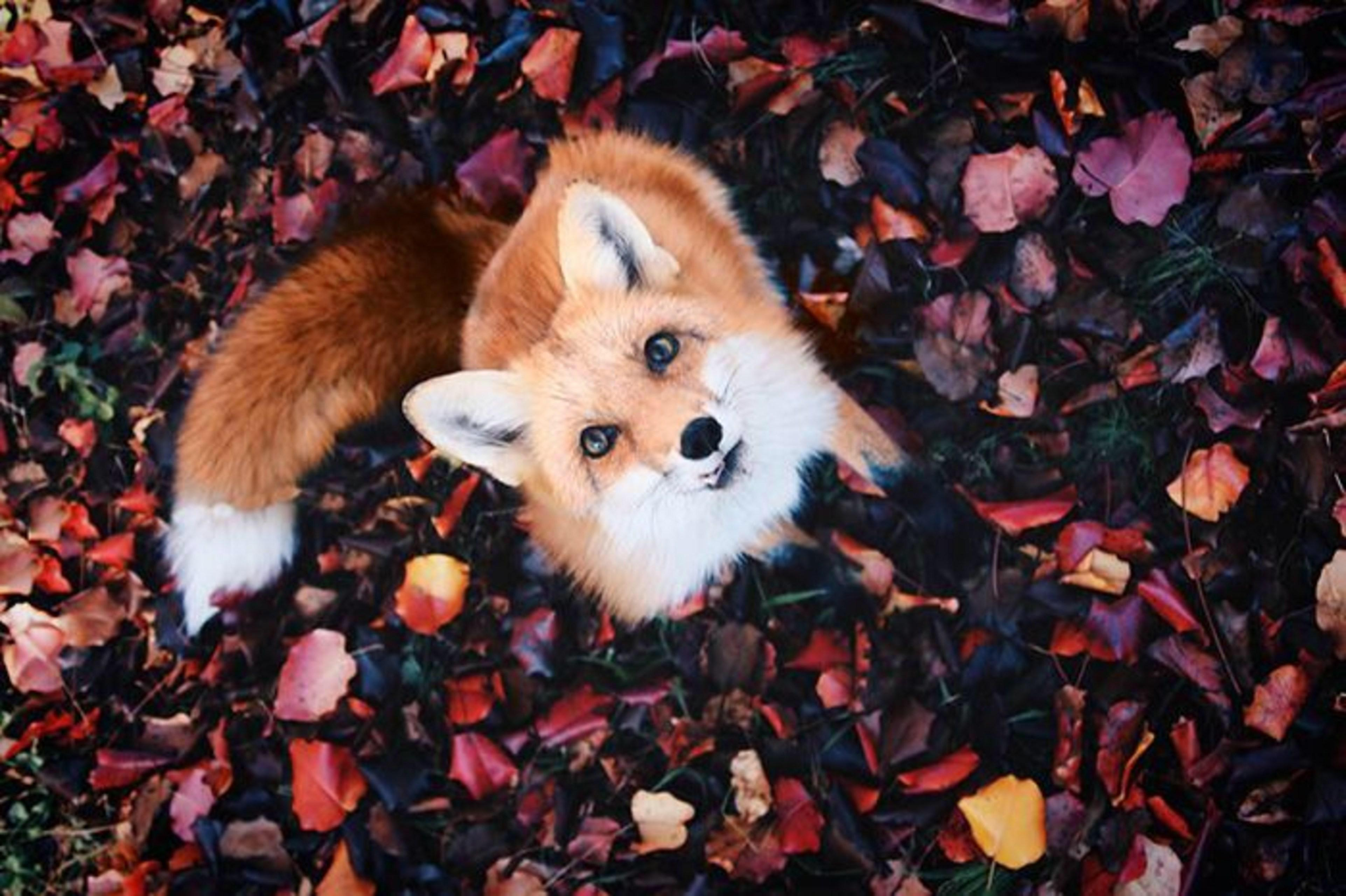 The colour contrast and this incredibly photogenic fox