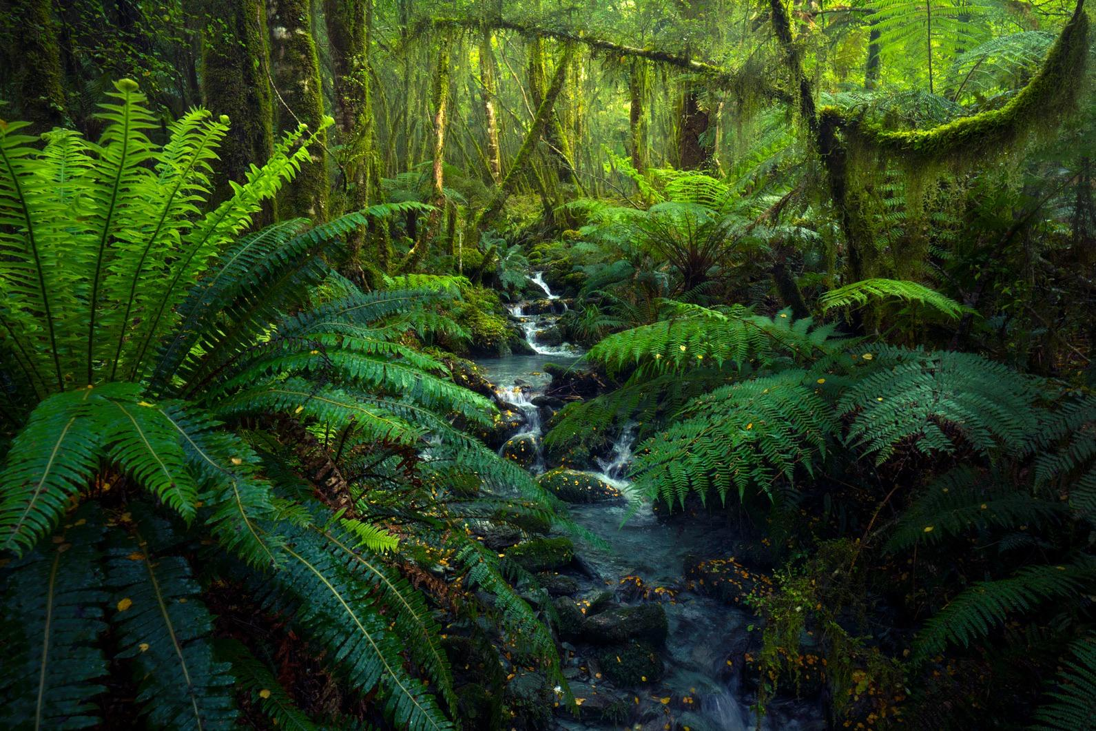 50 shades of green. Fiordland, New Zealand