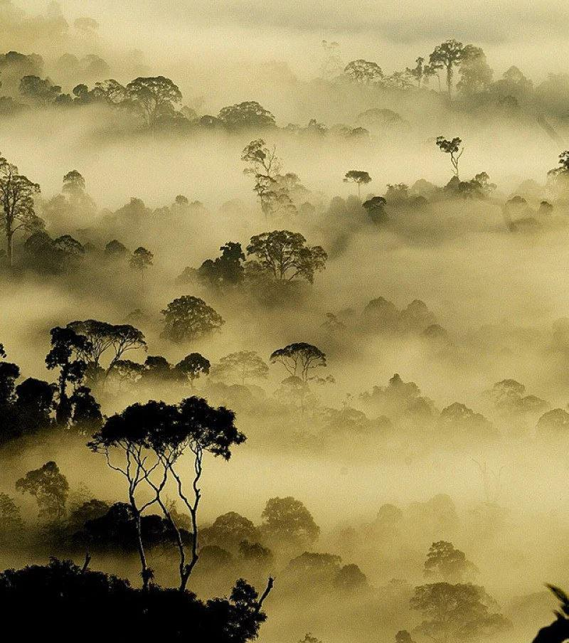 Morning mist over the rainforest of Borneo in Malaysia