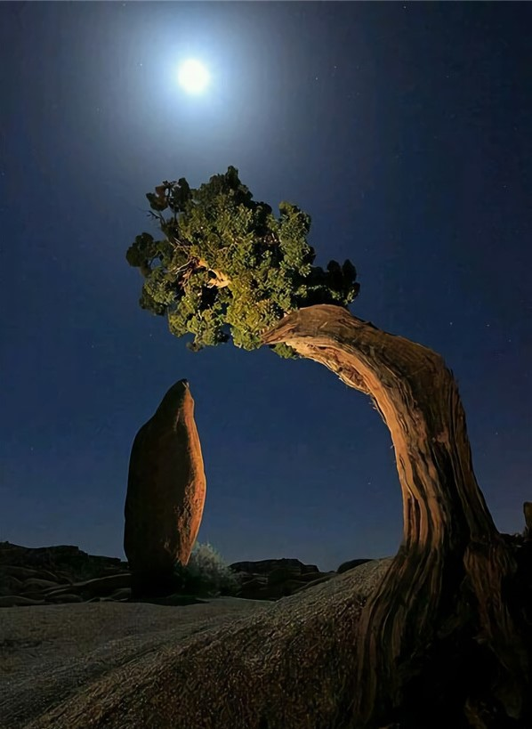 THE LEANING JUNIPER AND THE BALANCED ROCK