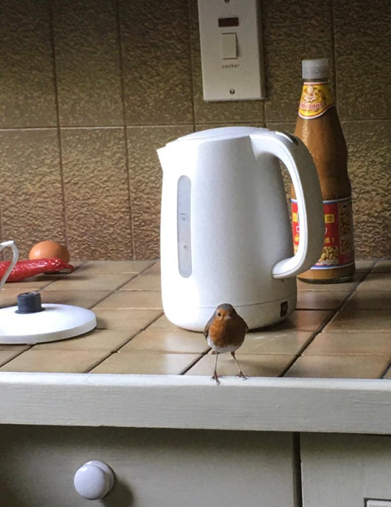 A robin has moved into my home