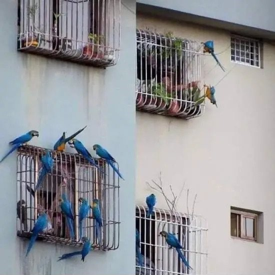 Birds visiting humans stuck in cages