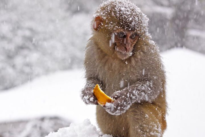 A bit cold in here, monkey