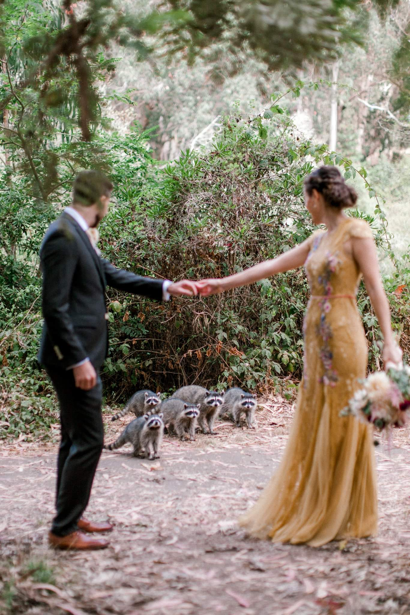 They got photobombed by raccoons while their wedding photo shoot