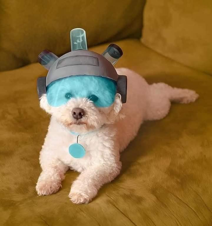 Where are my testicles,Summer