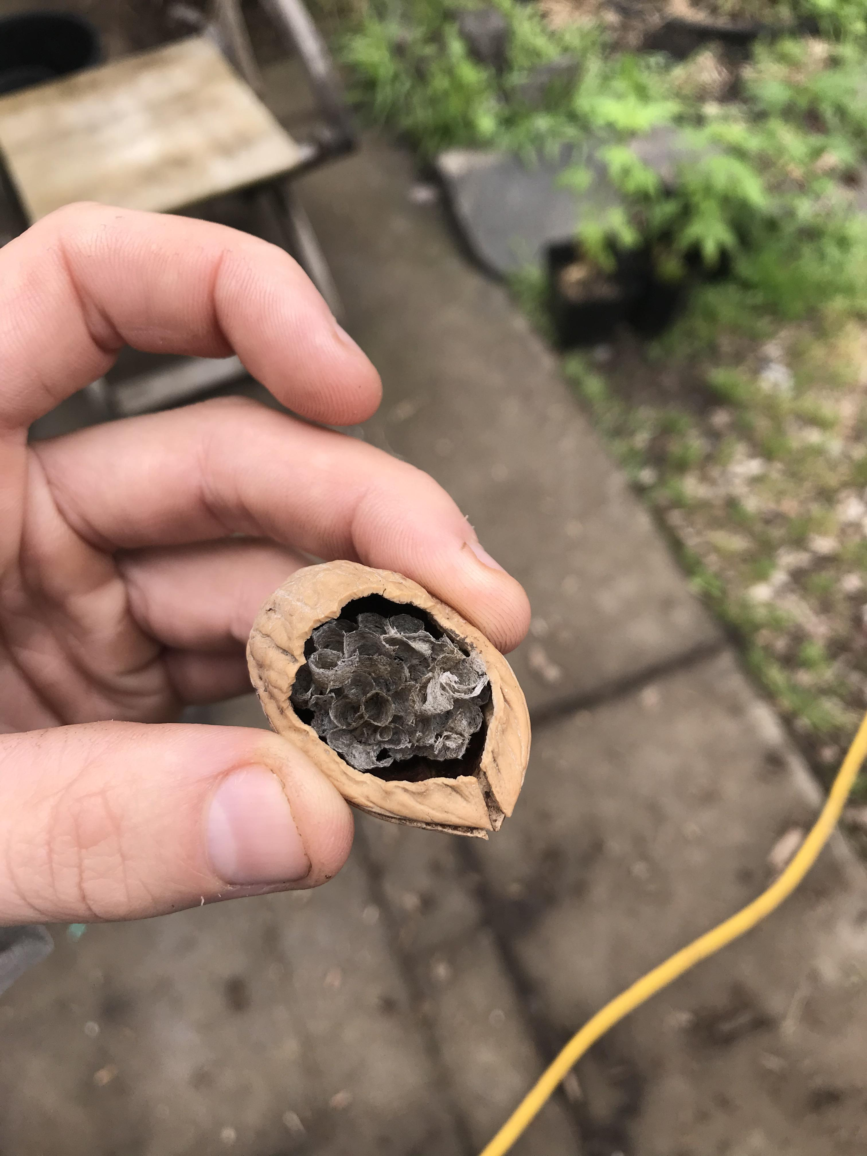 The wasp nest, in a nutshell