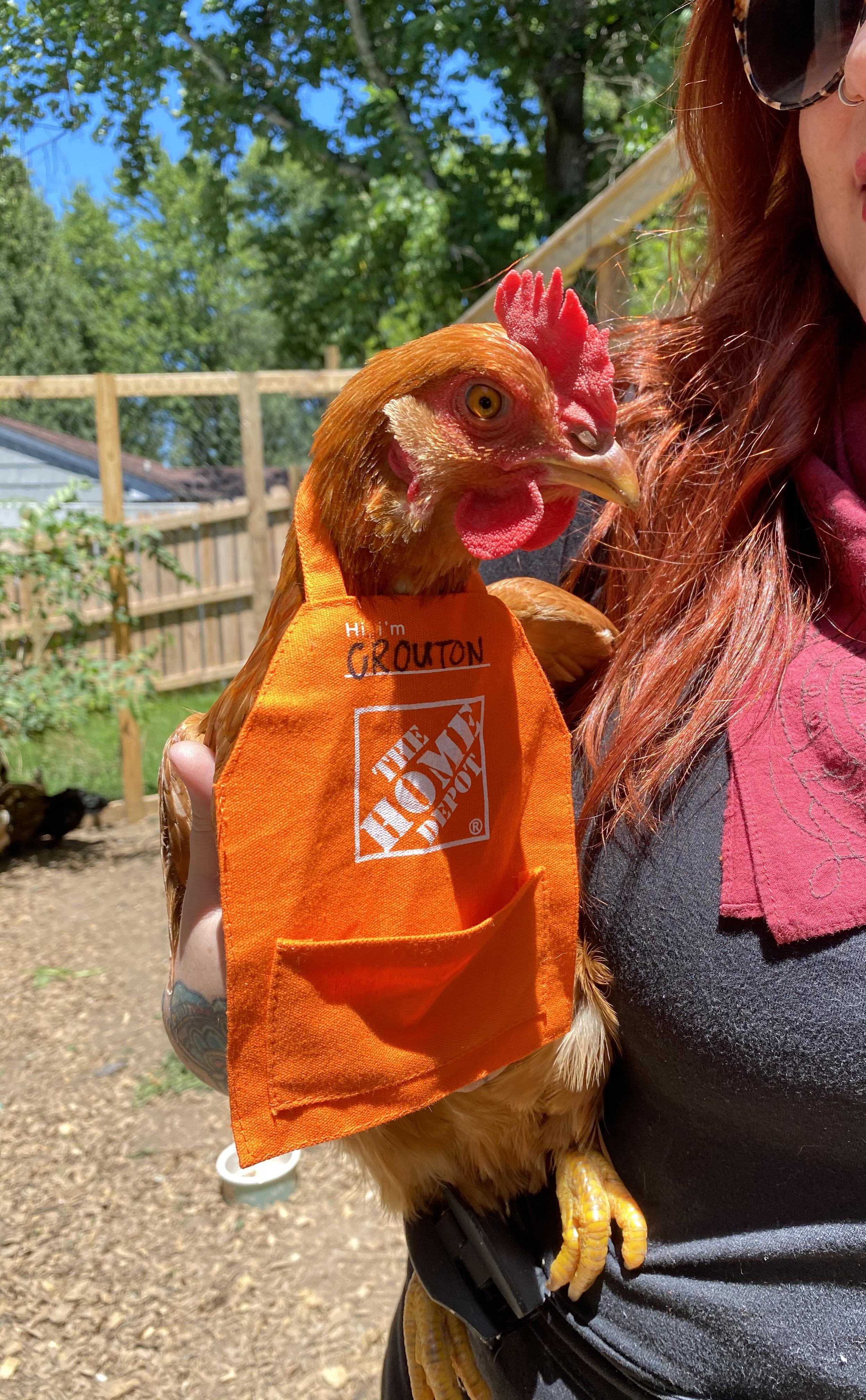 Home Depot gift card aprons fit chickens