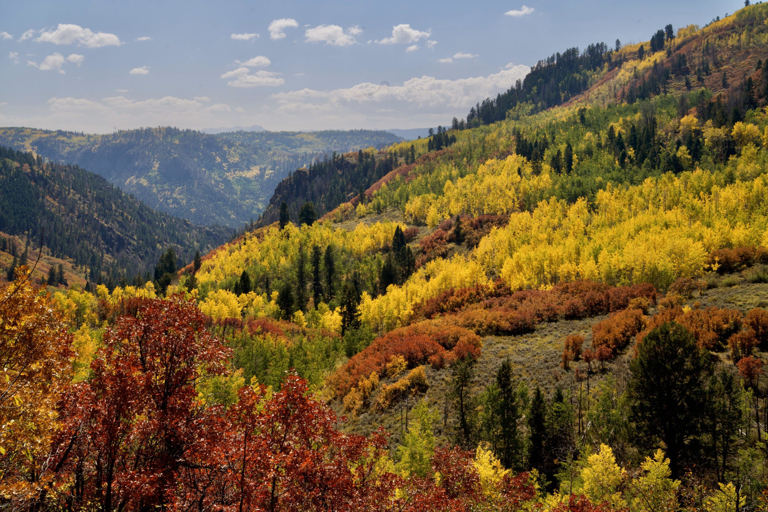 Colorado is wondering if you're tired of fall color posts yet