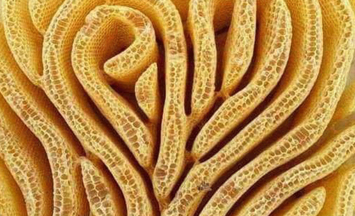 The artwork of bees