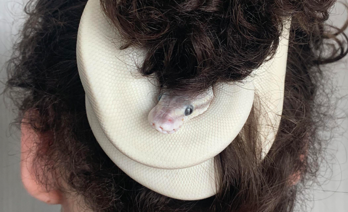 The way this snake wrapped itself around my friend's hair